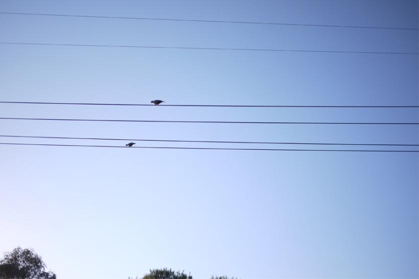 birds_lines