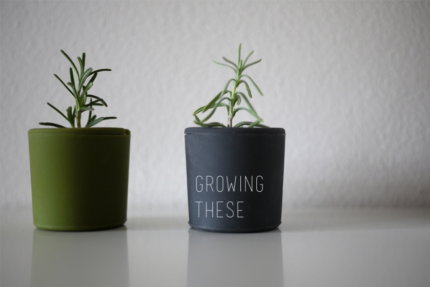 plant_pod_grow