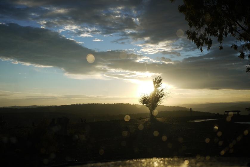 sunrise_kangaroo_sillhouette