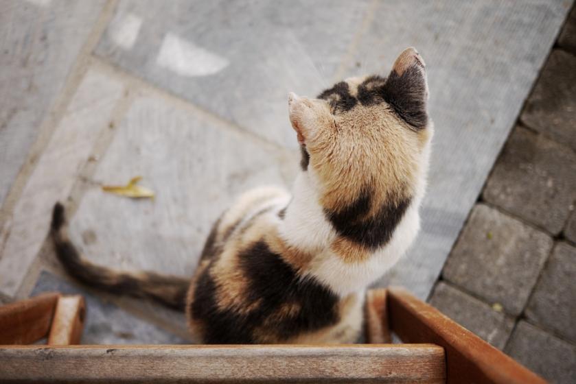 greece_cat