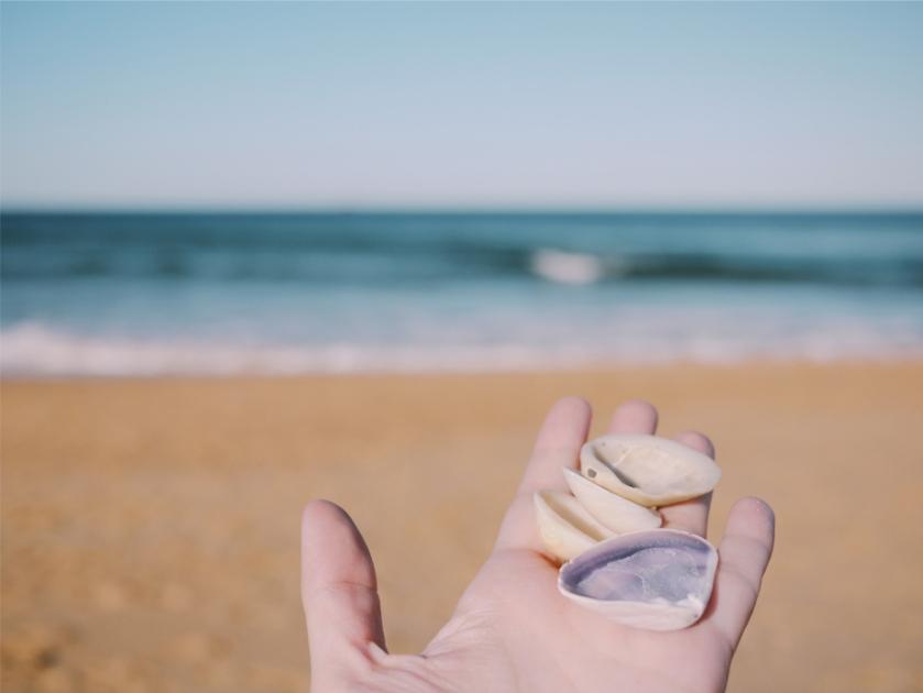 beach-shells-ocean