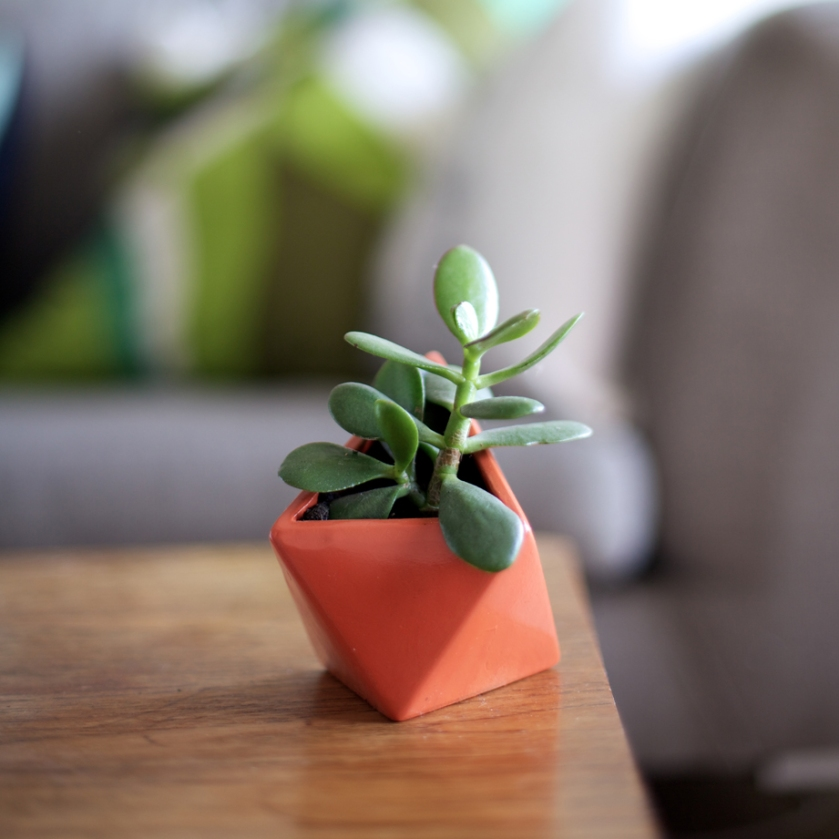 geometric succulent | south by north
