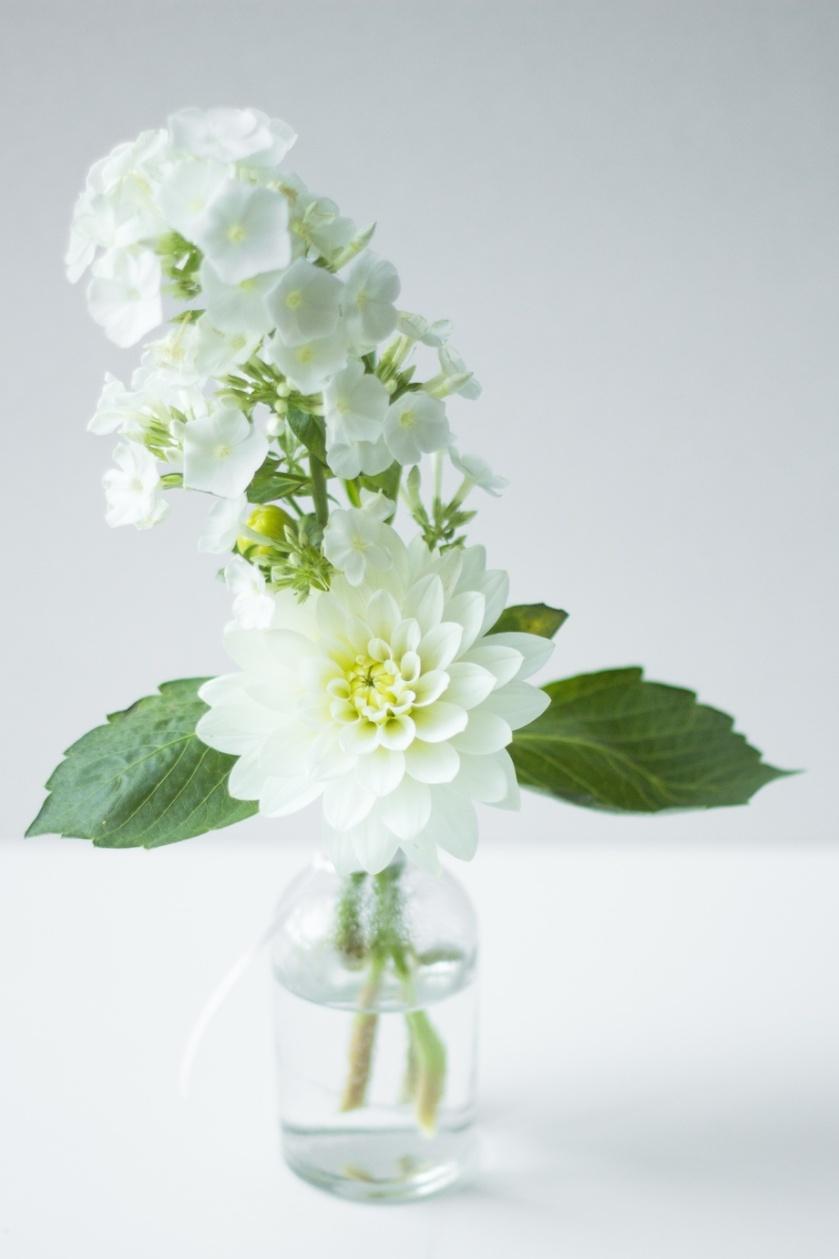 TanaGandhi-FloraStudy-3 (2)