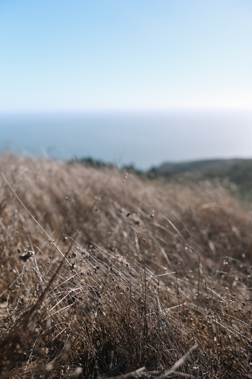 mount tamalpais | south by north